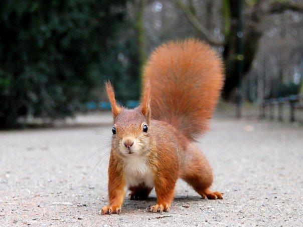 Kampfhörnchen Eddi - bester Freund des SimsalaSEO