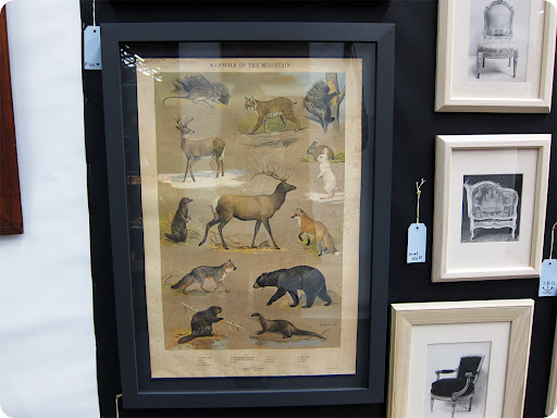 A framed poster of mountain mammals.