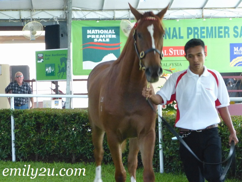 2012 National Premier Sale
