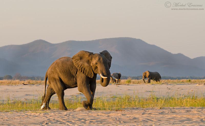 elephant_river_3a_ManaPools_2012.jpg