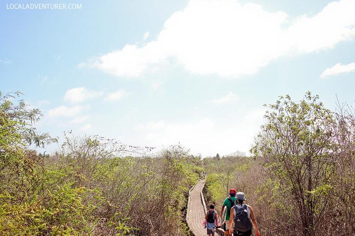 Hike to Tortuga Bay Ecuador.
