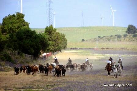 Jerez de la Frontera, tierra del toro bravo