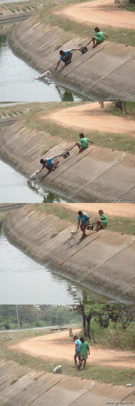 Kids Save Dog In Drain