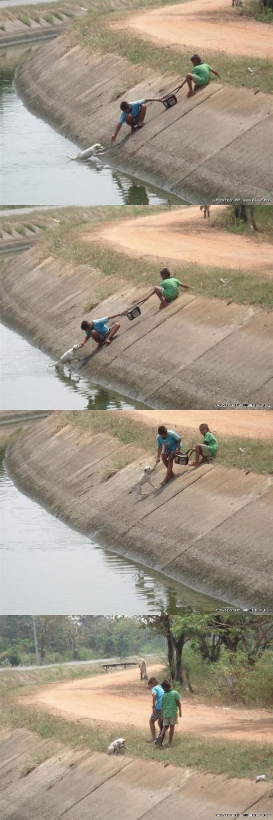 Kids Save Dog In Drain