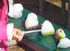 Child uses a dropper to add liquid water colors to snowballs while observing melting.