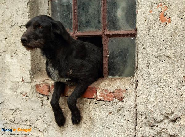 Mirowo psinka z okienka