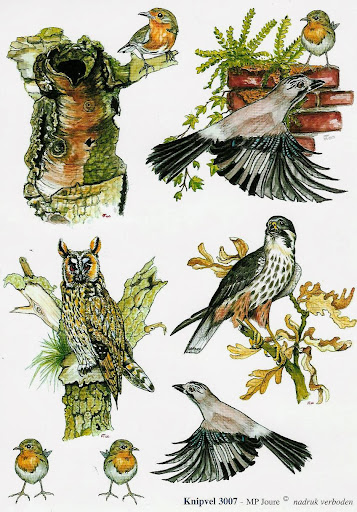 3d vogels natuur.jpg