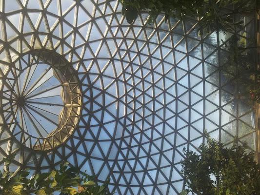 Brisbane Botanic Gardens, Mt Coot-Tha Rd, Toowong QLD, Australia