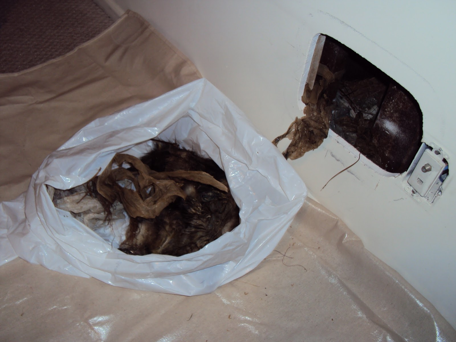 All City Animal Trapping Dead Animal Removal In Riverside