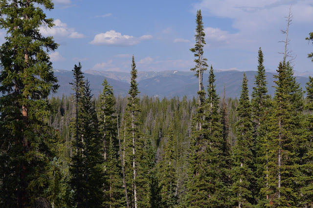 distant mountains over the trees