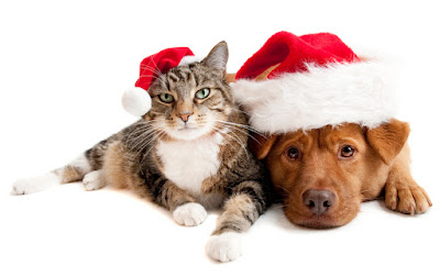 Cat and Dog with Santas Claus hats on white background