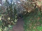 Ruta pel Parc Natural d'Anaga
