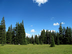Meadow amid the pine trees