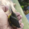 sakthi chandran14