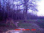 Louisiana Trophy Bucks