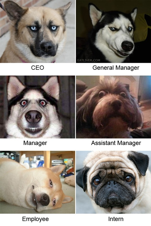 photo of a lot of dogs that are in various management positions