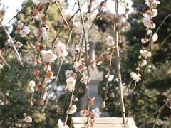 宝戒寺の梅