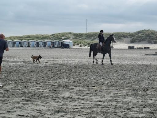 N F Hoek van Holland (71).JPG