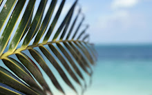 water leaf beach sea tropical palm trees depth of field 1920x1200 wallpaper