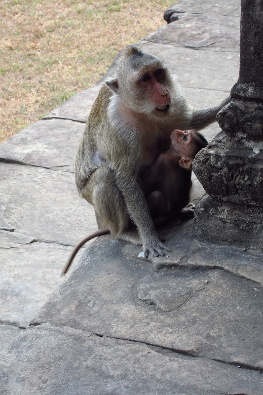 Monkey and baby at Angkor