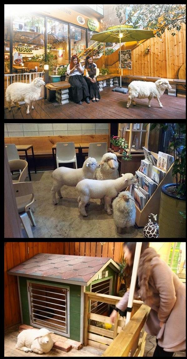 Blog Serius: Serius Cute - Thank Nature Cafe : Kafe