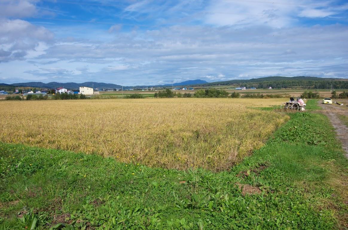 青々と茂る畦の草