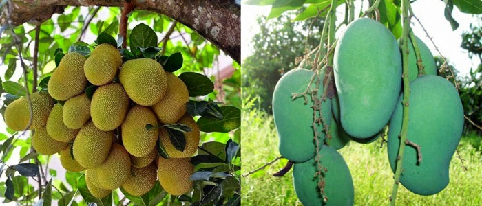 fruit trees nursery, Natural flower