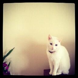 Kitty Chow