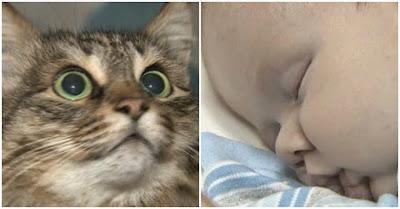 Gato salva bebé abandonado na Rússia