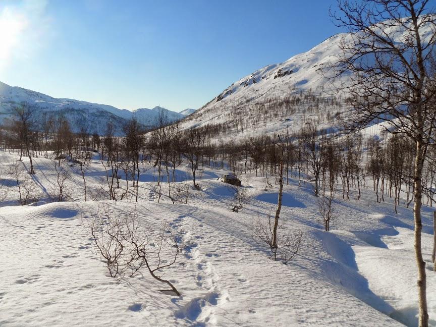 Norvège mars 2014 SAM_1331