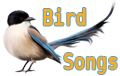 Bird-Songs