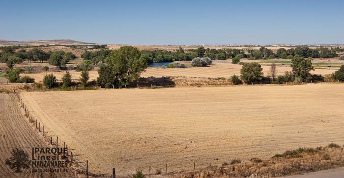 campos de cultivo en el Parque Lineal