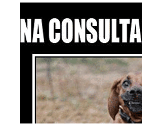escola-veterinaria-humor-do-bixo-2-na-consulta-veterinaria