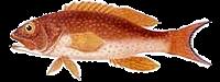 fisk061.png?gl=DK
