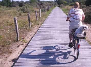 Pudelwohl: Hund im (Fahrrad)-Korb, Ostsee-Radweg in Mecklenburg-Vorpommern