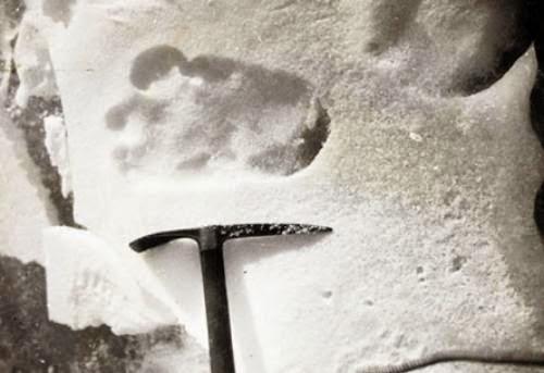 Bidding Underway For Shiptons Yeti Footprint Photographs