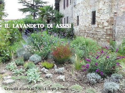 Angoli di giardino e idee per realizzare aiuole foto for Aiuole sempreverdi