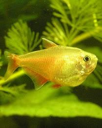 Jak prawidłowo karmić ryby hodowane w akwarium