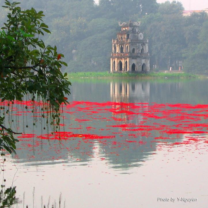 Hoa Lộc Vừng Hồ Hoàn Kiếm