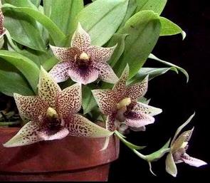 Растения из Тюмени. Краткий обзор - Страница 7 633
