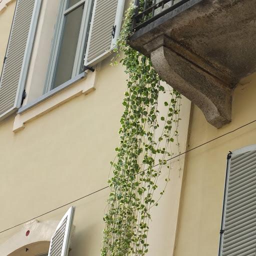 Piante ricadenti perenni idea creativa della casa e dell for Piante da balcone perenni