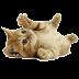 Αστείες Γάτες, Συλλογή (Android Gallery by Automon)