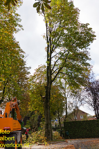 Bomen gekapt Museumlaan in overloon 20-10-2014 (18).jpg