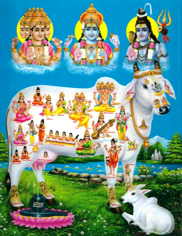 Deities Dwelling In The Body Of Holy Cow, Kamadhenu - Gaumata
