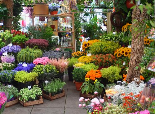 Bunga Papan Murah dan Berkualitas