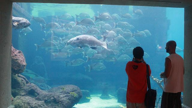 acuario bahamas atlantis