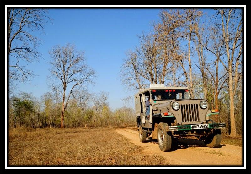 Betla Forest - Safari