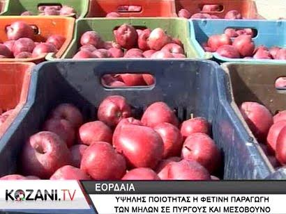 Υψηλή η ποιότητα της φετινής παραγωγής μήλων σε Μεσόβουνο και Πύργους (video)