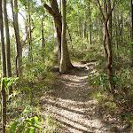 Moist rainforest in Green Point Reserve (389885)