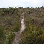 Track through low heath (107323)